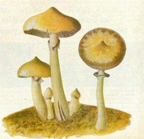 ROBERT GORDON WASSON Seeking the Magic Mushroom